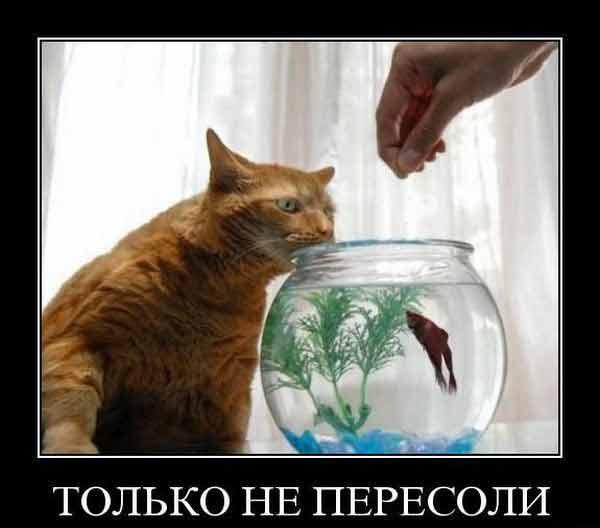Фоменко приколы слушать наруто