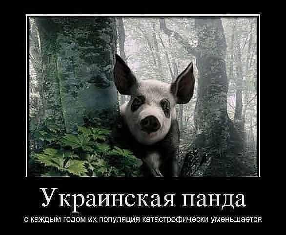 приколы хентай: